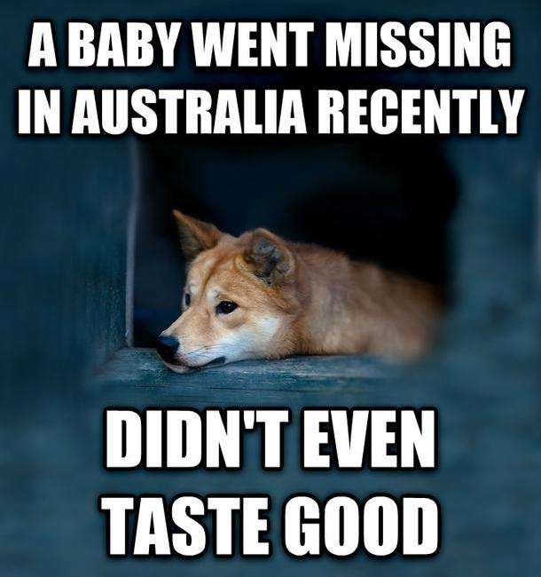 A Baby Went Missing Dingo Meme