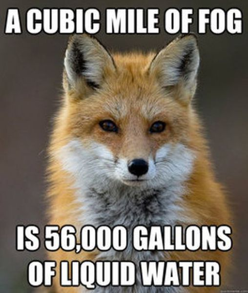 A Cubic Mile Of Fog Is 56,000 Gallons Red Fox Meme