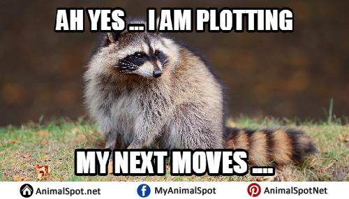 Ah Yes I Am Plotting Raccoon Meme