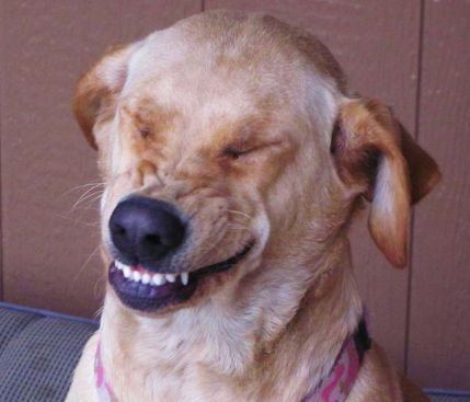 Amusing Dog Laughing Meme