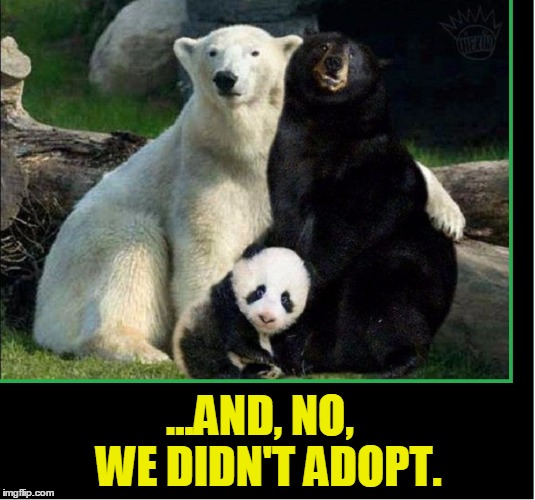 And No We Didn't Adopt Black Bear Meme