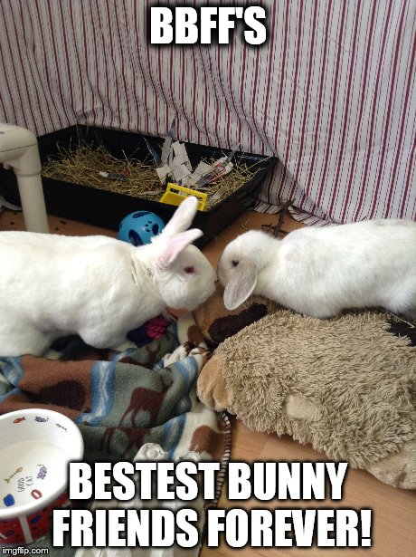 BBFF's Bestest Bunny Friennds Forever Rabbit Meme
