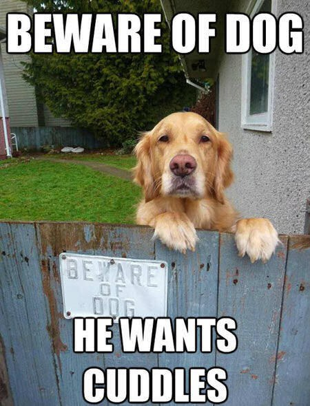 Beware Of Dog He Wants Cuddles Golden Meme