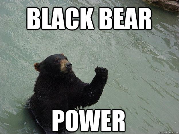 Black Bear Power Black Bear Meme