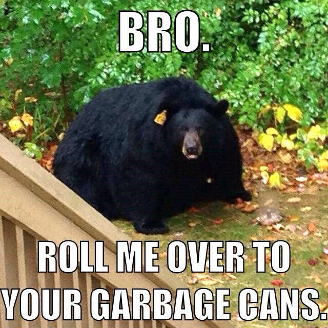 Bro Roll Me Over To Black Bear Meme