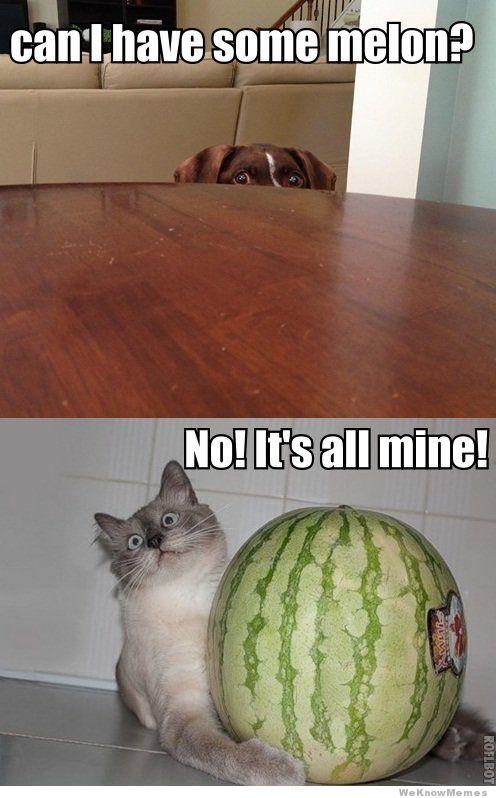 Can I Have Some Melon Melon Meme