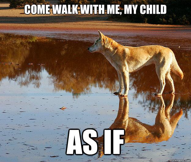 Come Walk With Me Dingo Meme