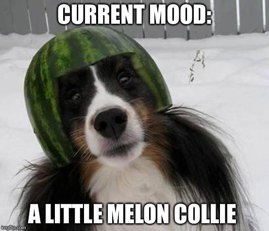 Current Mood A Little Melon Collie Melon Meme