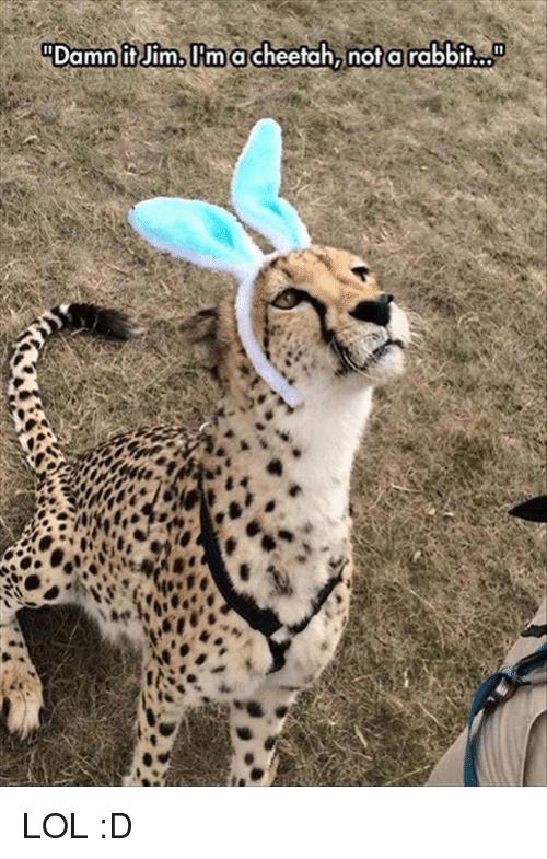 Damn It Jim I'm A Cheetah Meme