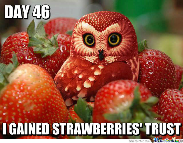Day 46 I Gained Strawberries Strawberry Meme