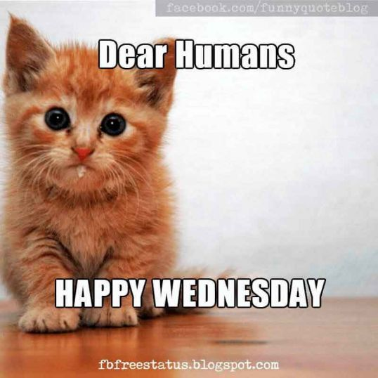 Dear Humans Happy Wednesday Wednesday Meme