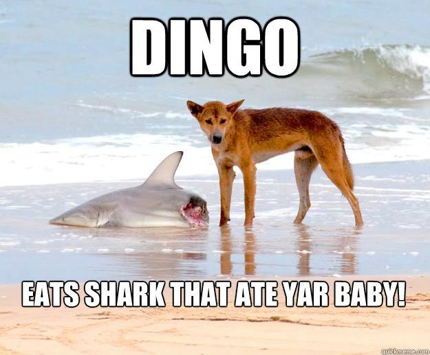 Dingo Eats Shark That Ate Dingo Meme