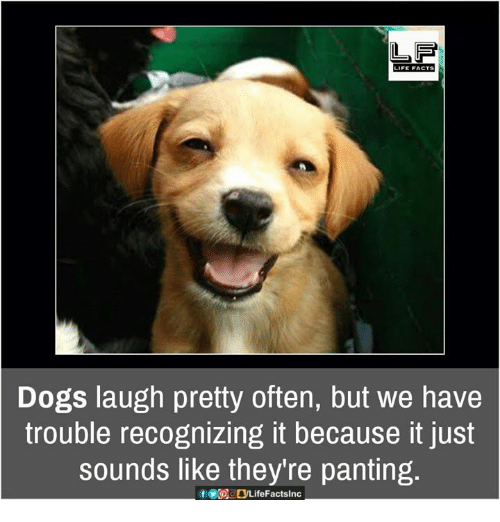 Dogs Laugh Pretty Dog Laughing Meme