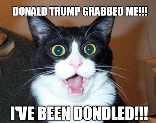 Donald Trump Grabbed Me Cat Meme