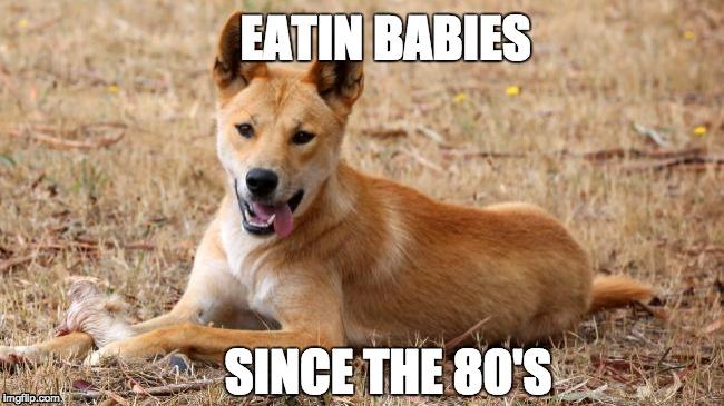 Eatin Babies Since The Dingo Meme