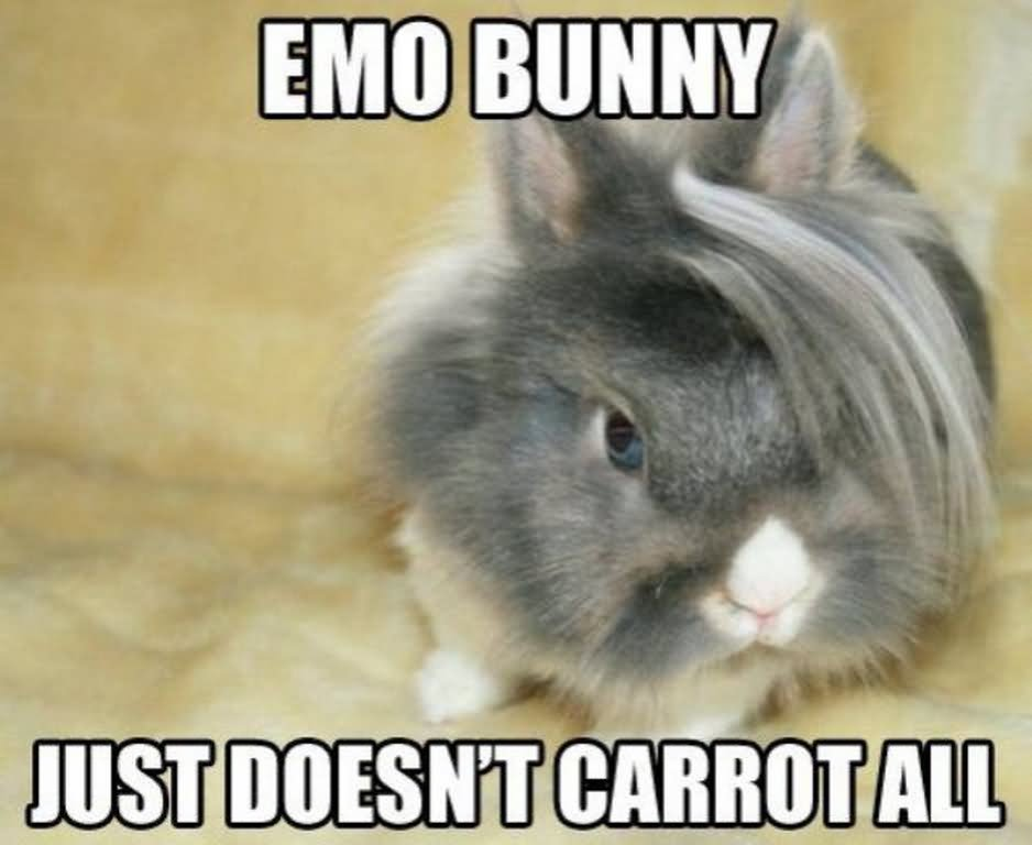 Emo Bunny Just Doesn't Carrot All Rabbit Meme