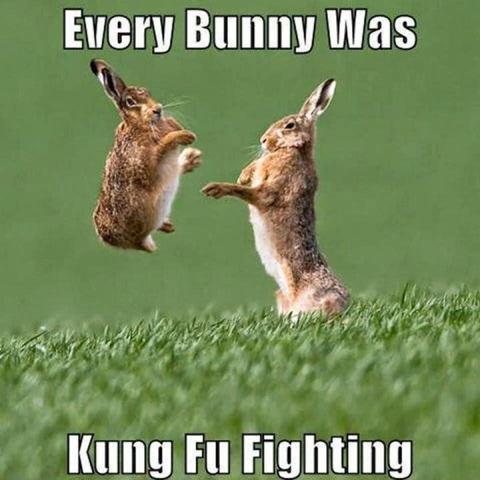 Every Bunny Was Kung Fu Rabbit Meme
