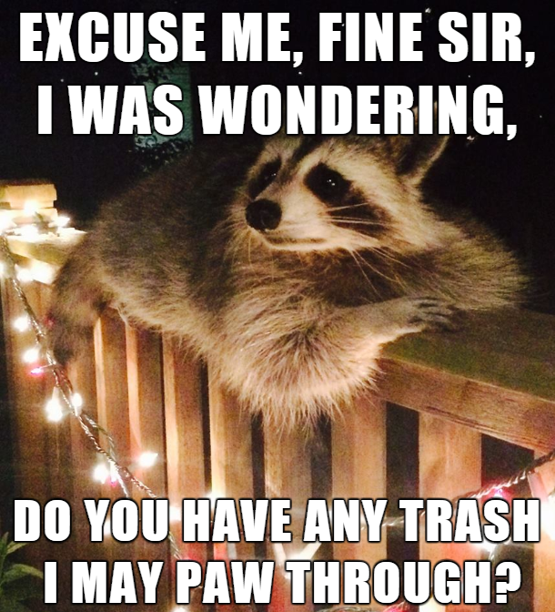 Excuse Me Fine Sir Raccoon Meme