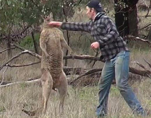 19 Funniest Kangaroo Meme That Make You Laugh | MemesBoy You Go Girl Meme Funny