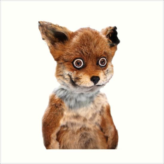 Funny Fox Meme