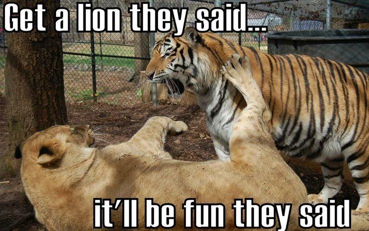 Get A Lion They Said Lion Meme
