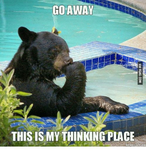Go Away This Is My Black Bear Meme