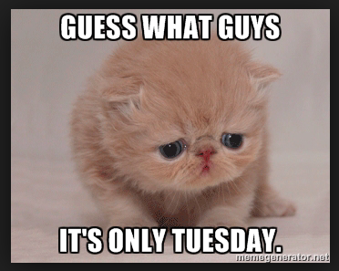 Guess What Guys It's Tuesday Meme