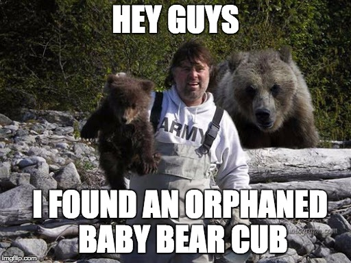Hey Guys I Found Cub Meme