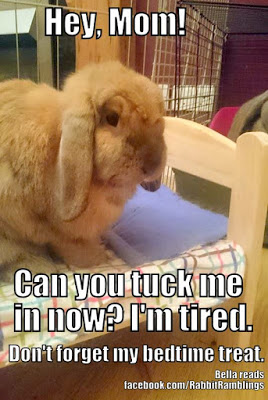 Hey Mom! Can You Tuck Me Rabbit Meme