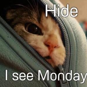 Hide I See Monday Sunday Meme
