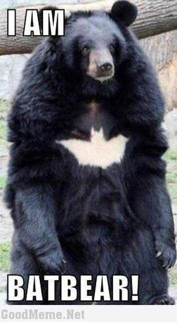I Am BatBear Black Bear Meme