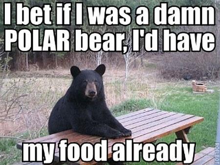 I Bet If I Was A Damn Black Bear Meme