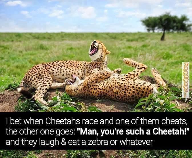 I Bet When Cheetahs Race Cheetah Meme