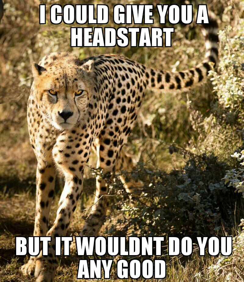 I Could Give You A Cheetah Meme
