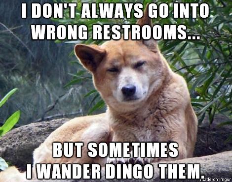 I Don't Always Go Into Dingo Meme