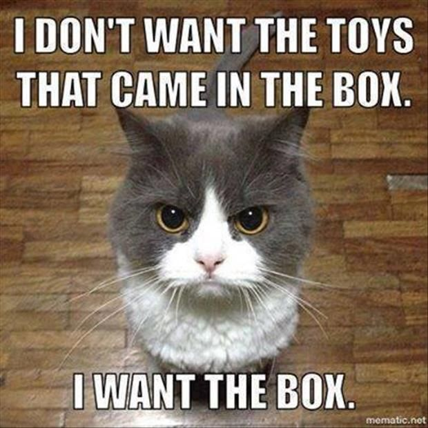 I Don't Want The Toys Cat Meme