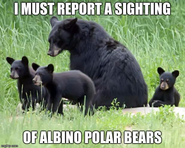 I Must Report A Sighting Black Bear Meme