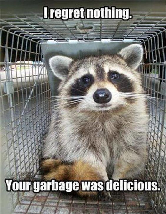 I Regret Nothing Your Garbage Raccoon Meme
