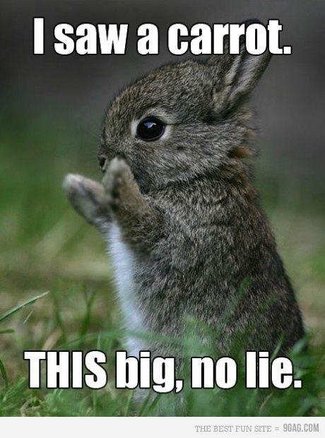 I Saw A Carrot This Big Rabbit Meme