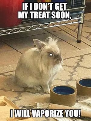If I Don't Get My Treat Rabbit Meme