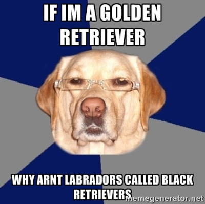 If Im A Golden Retriever Golden Meme