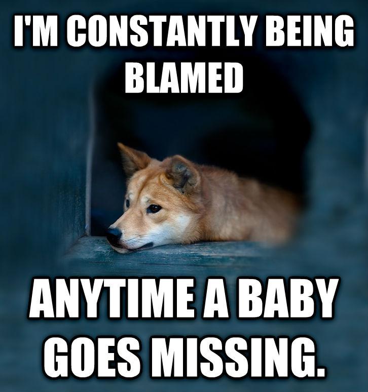 I'm Constantly Being Blamed Dingo Meme