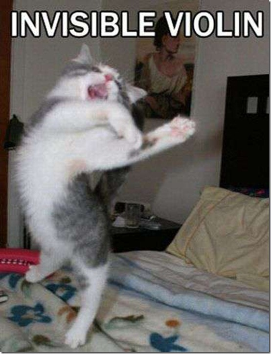 Invisible Violin Cat Meme