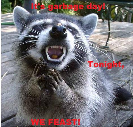 It's Garbage Day! Tonight Raccoon Meme