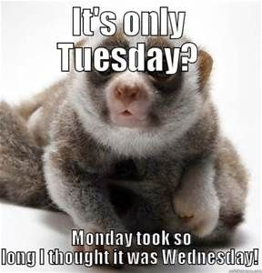 It's Only Tuesday Monday Tuesday Meme