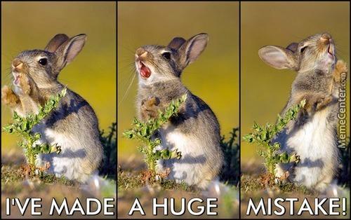 I've Made A Huge Mistake Rabbit Meme