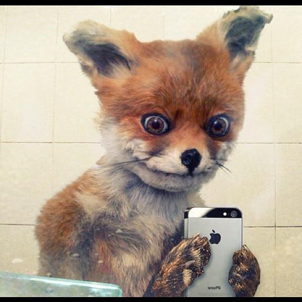 Jokey Fox Meme