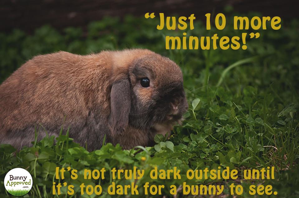 Just 10 More Minutes Rabbit Meme