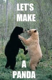 Let's Make A Panda Black Bear Meme