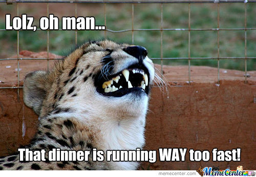 Lolz Oh Man That Cheetah Meme